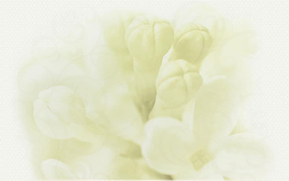Decor Cersanit Andrea Decor Flower-2 500x400 lucioasă alb / 5